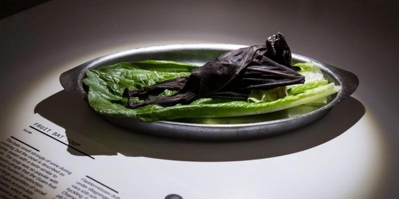 【閲覧注意】世界最も気持ち悪い食べ物博物館!中国と日本の食べ物が多数展示される
